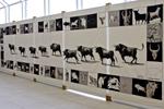 Exposition Mathieu Sodore